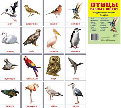 Демонстрационные  картинки Птицы разных широт.16 раздаточных карточек с тексто
