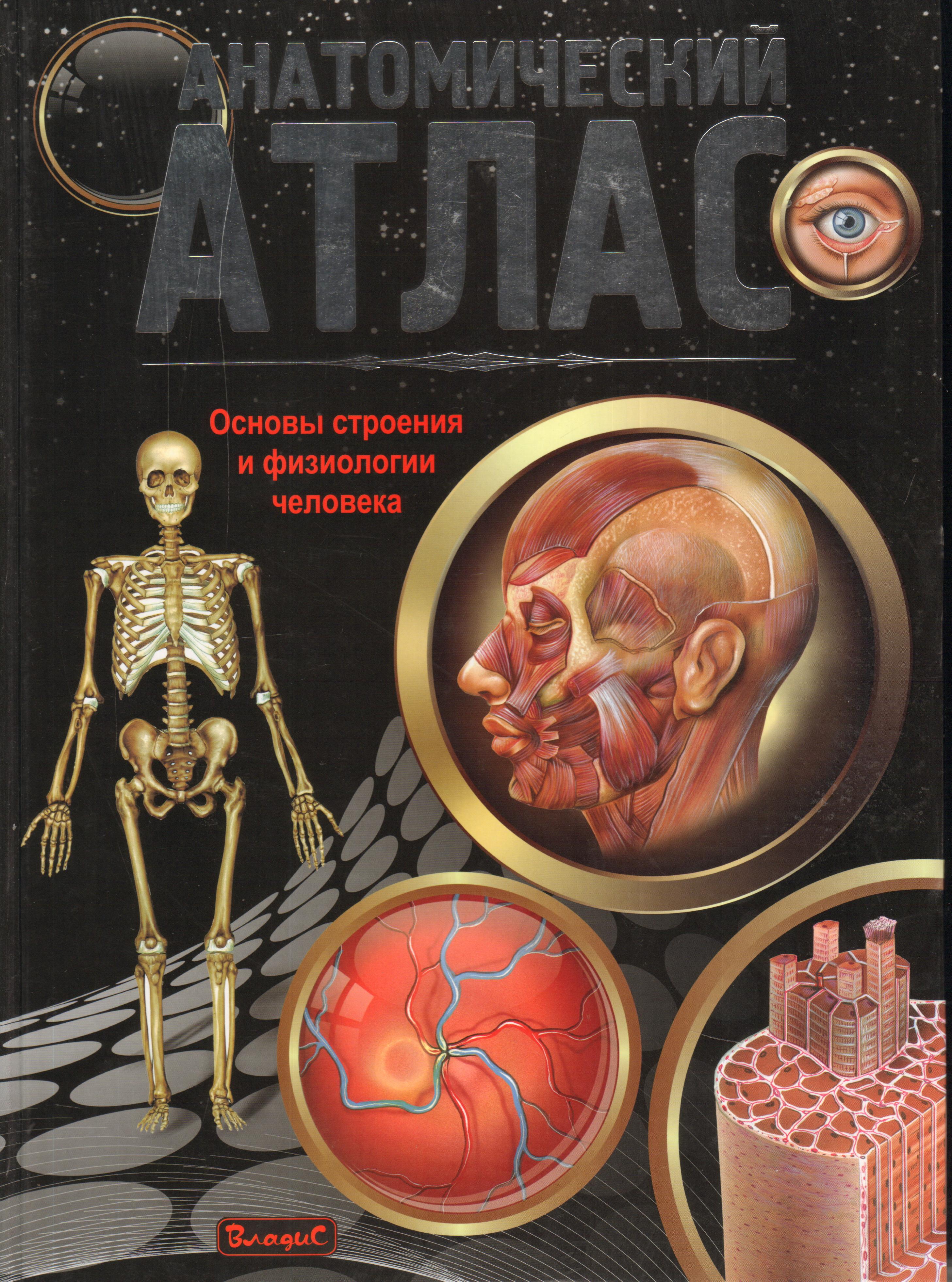 Анатомический атлас. Основы строения и физиологии