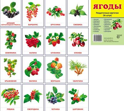 Демонстрационные картинки Ягоды.16 раздаточных карточек с текстом
