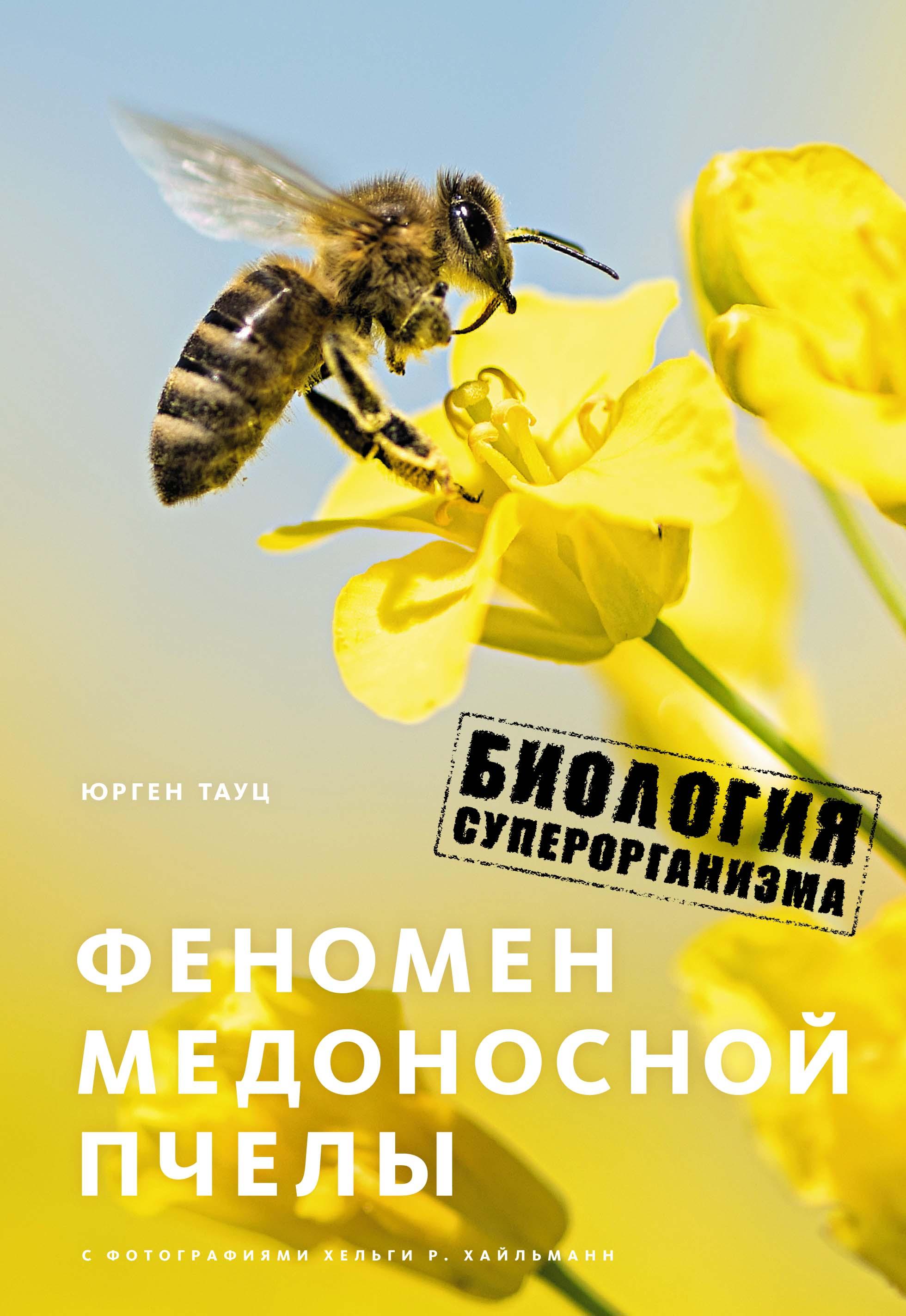 Феномен медоносной пчелы. Биология суперорганизма