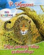 Как леопард стал пятнистым