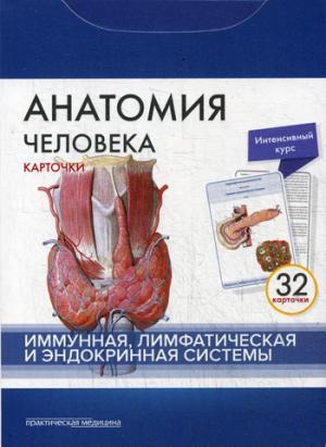 Анатомия человека. Иммунная, лимфатическая и эндокринная системы (набор из 32 карточек)