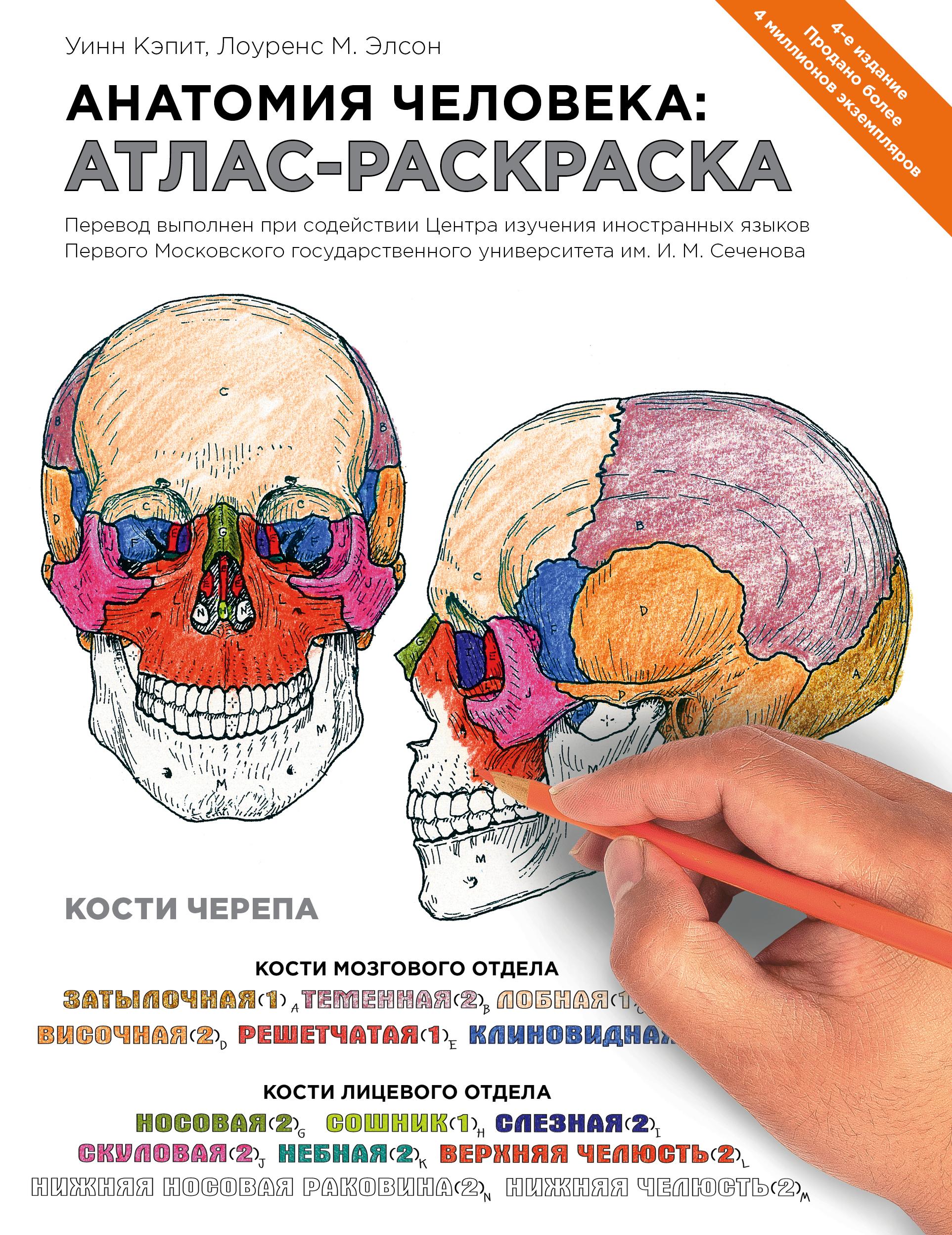 Анатомия человека: атлас-раскраска